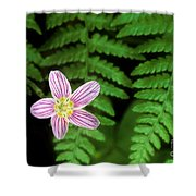 Redwood Sorrel Wildflower Nestled In Ferns Shower Curtain