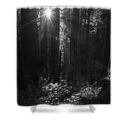 Redwood Sunburst Monochrome Shower Curtain