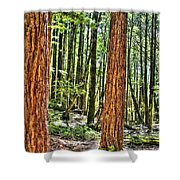 Redwoods 2 Big Basin Shower Curtain