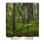 Redwoods 2 Shower Curtain