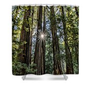 Redwoods Shower Curtain