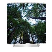 Redwoods II Shower Curtain