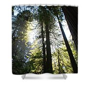 Redwoods IIII Shower Curtain