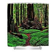 Redwoods Wonderland Shower Curtain by Benjamin Yeager