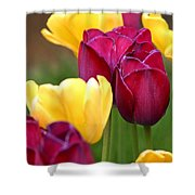 Redyellowtulips6728 Shower Curtain