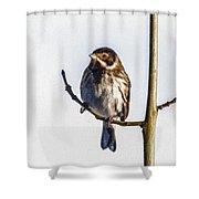 Reed Bunting Emberiza Schoeniclus Shower Curtain