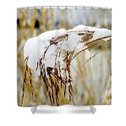 Reed With Snow Shower Curtain