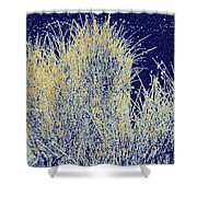 Reeds Along The Shore Shower Curtain
