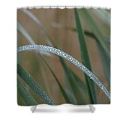 Reeds And Rain Shower Curtain