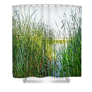 Reeds And River Shower Curtain