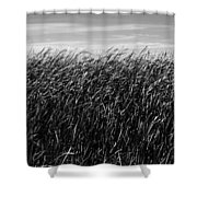 Reeds And Sky Shower Curtain