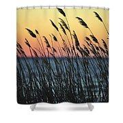 Reeds At Sunset Island Beach State Park Nj Shower Curtain