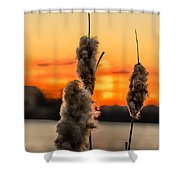 Reeds At Sunset Shower Curtain