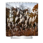 Reeds Highlighted By The Sun Shower Curtain