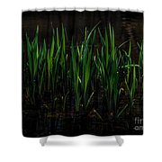Reeds Shower Curtain
