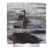 Reef Egret Shower Curtain