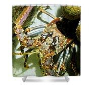 Reef Lobster Close Up Spotlight Shower Curtain