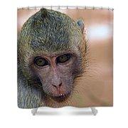 Reese's Monkey Portrait Shower Curtain