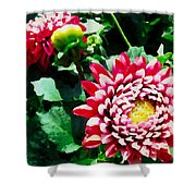 Ref Dahlias Shower Curtain