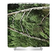 Reflected Branch Shower Curtain