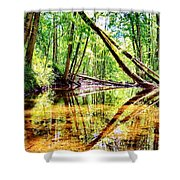 Reflected Forests Shower Curtain