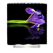 Reflected Iris Shower Curtain