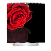 Reflected Red Rose Shower Curtain