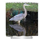 Reflecting Great Blue Heron Shower Curtain
