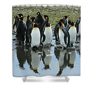 Reflecting King Penguins Shower Curtain