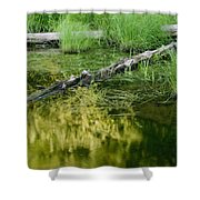 Reflecting Pond Glacier National Park Painted Shower Curtain