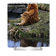Reflecting Stripes Shower Curtain