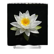 Reflecting Water Lilly IIi Shower Curtain