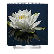 Reflecting Water Lilly Shower Curtain