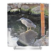 Reflection Of A Black-crowned Night Heron Shower Curtain