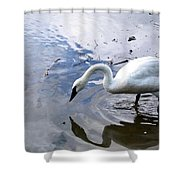 Reflection Of A Lone White Swan Shower Curtain