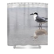 Reflection Of A Tern Shower Curtain