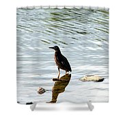 Reflection Of The Green Heron Shower Curtain