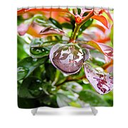 Reflections In Raindrops Shower Curtain