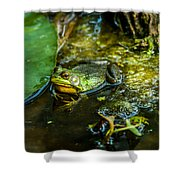 Reflections Of A Bullfrog Shower Curtain