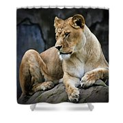 Reflections Of A Lioness Shower Curtain