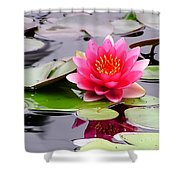 Reflections Of A Pink Waterlily  Shower Curtain