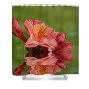 Reflections Of A Rhododendron Shower Curtain