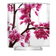 Reflections Of Beauty 2 Shower Curtain