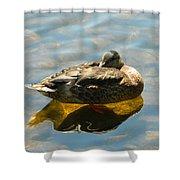 Reflective Mallard Resting Shower Curtain
