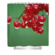 Reflective Red Berries  Shower Curtain
