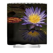 Reflective Water Lily Still Life Shower Curtain