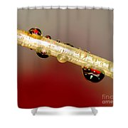 Refractions Of A Red Rose 2 Shower Curtain