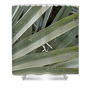 Refreshed By Rain Shower Curtain