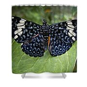 Regal Blue Butterfly Shower Curtain