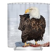 Regal Eagle Shower Curtain